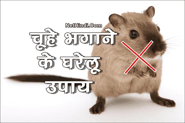 घर से चूहे भगाने के उपाय